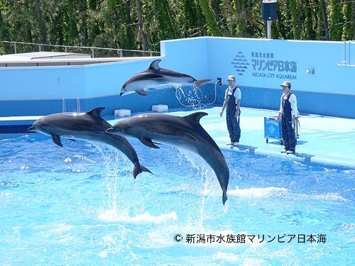 【水族館チケット付宿泊プラン】みんなで行こうよ!マリンピア日本海!~駐車料金無料・ご朝食付~