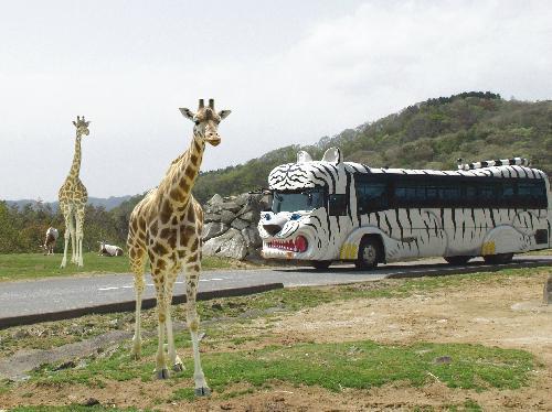 姫路セントラルパークのサファリゾーンは動物たちがいっぱい