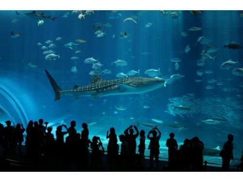美ら海水族館チケット付き宿泊プラン(朝食なし)