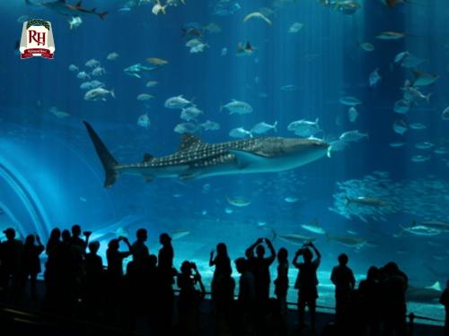 【朝食付き】美ら海水族館入館チケット付プラン