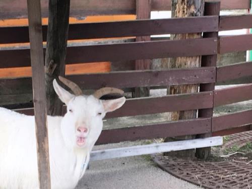 【期間限定】 「秋田市大森山動物園オモリンの森」お得な入場券付きプラン ~食事なし~